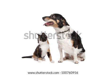 Kitten and Jack Russel Terrier in front of a white background - stock photo