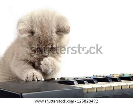 kitten and piano - stock photo