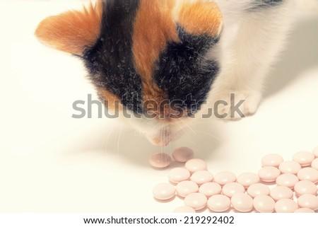 kitten and pills - stock photo