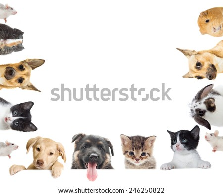 kitten and puppy and bunny and guinea pig watching on a white background - stock photo