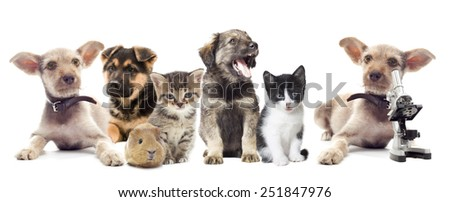 kitten and puppy and microscope - stock photo