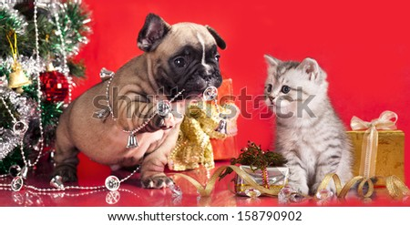 kitten and puppy, holiday decorations - stock photo