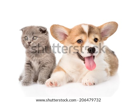 kitten and puppy in front. isolated on white background