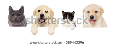 kitten and puppy Labrador peeps