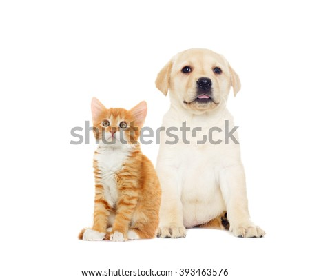 kitten and puppy, looking