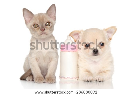 Kitten and puppy near baby bottle on a white background - stock photo