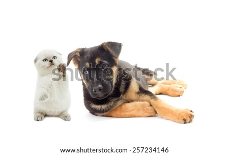 Kitten and puppy on a white background isolated