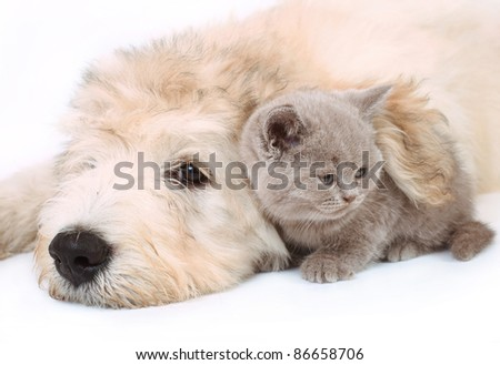 Kitten and puppy on white background. - stock photo