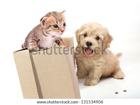Kitten and Puppy playing on white background - stock photo