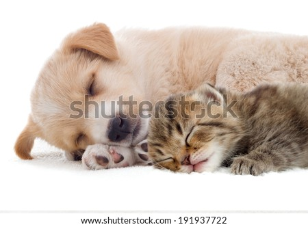 kitten and puppy sleeping together - stock photo