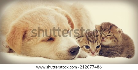 kitten and puppy together  - stock photo