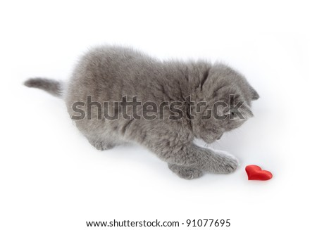 kitten and red decorative heart