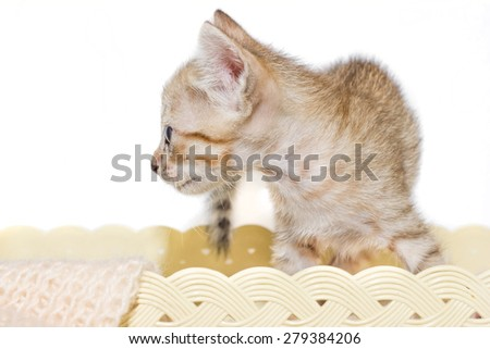 Kitten and yarn in basket. - stock photo