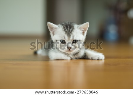 Kitten. Baby cat. Little cute cat. - stock photo