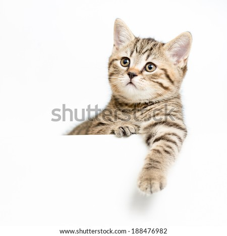 kitten behind white signboard isolated - stock photo