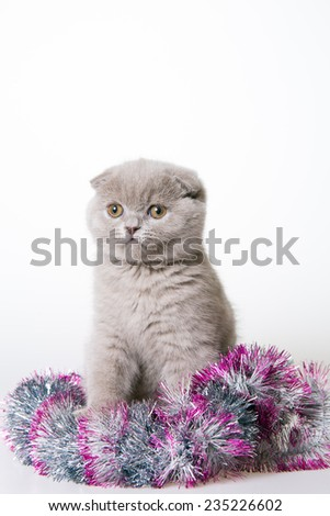 Kitten Christmas. Gray cute kitten. white background - stock photo