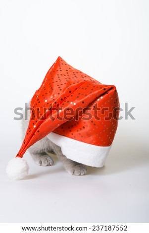 kitten climbed out of the hat of Santa Claus, gray kitten in a red hat on a white background, the end of the holiday, crawled out from under his cap. Christmas card. the inscription on a white