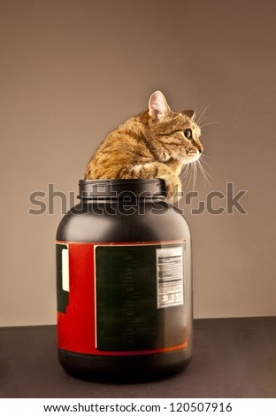 Kitten climbing out of a bank - stock photo