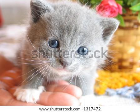 Kitten closeup - stock photo