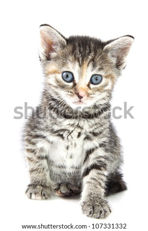 Kitten closeup isolated on a white background - stock photo