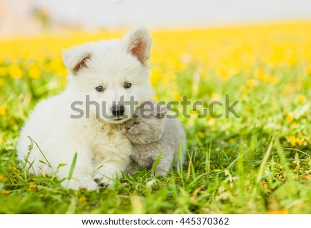 kitten cuddle to a puppy on dandelion field