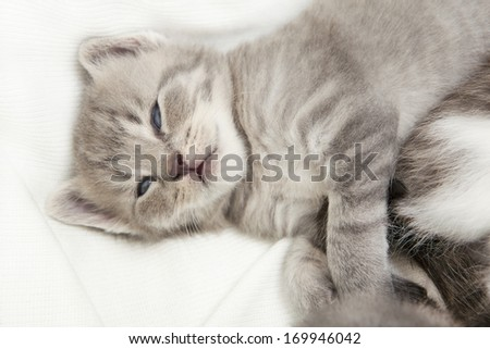 kitten cuddling, a heap of cat is cuddly babies on their mother - stock photo