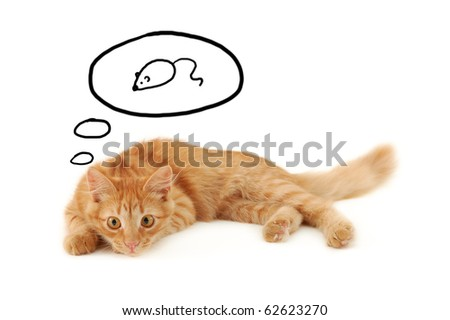 kitten dreaming of mouse isolated on white background - stock photo