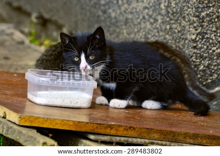kitten drinking milk - stock photo