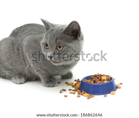 kitten eating cat food on white background. horizontal photo. - stock photo