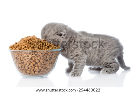 kitten eating food from a large bowl. isolated on white background - stock photo