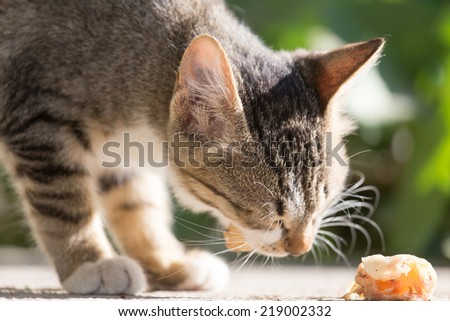 kitten eats - stock photo