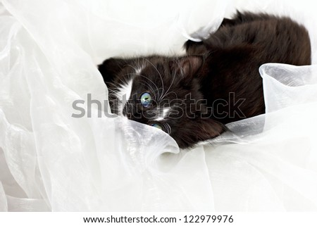Kitten full body lying down on folds of white soft fabric background - stock photo