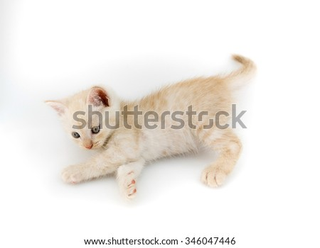 kitten funny playful on white background