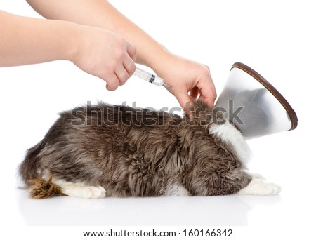 kitten getting a vaccine at the veterinary clinic. isolated on white background - stock photo