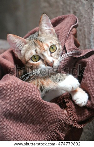 Kitten huddled in a blanket.