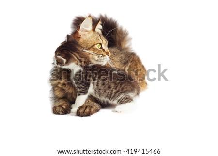 Kitten hugs cat - stock photo