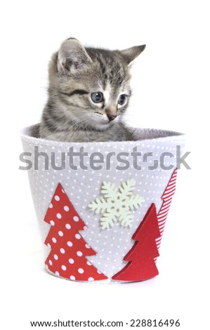 kitten in a christmas pot