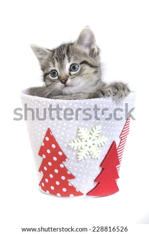 kitten in a christmas pot - stock photo