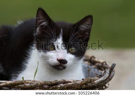 Kitten in a garden basket - stock photo