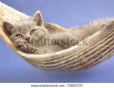 kitten in a hammock - stock photo