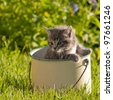 kitten in a pot - stock photo