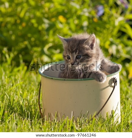 kitten in a pot - stock photo