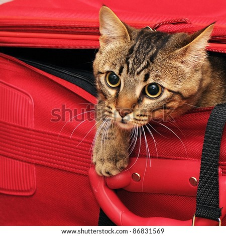 kitten in a suitcase - stock photo