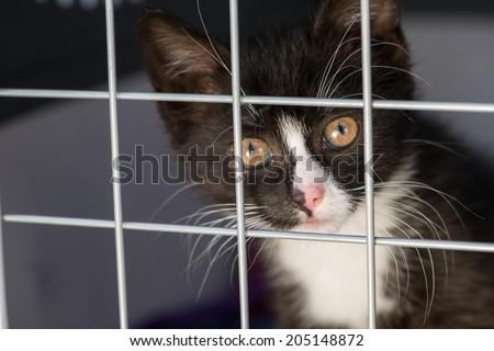 Kitten in a transport box - stock photo