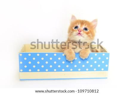 kitten in blue dot box - stock photo