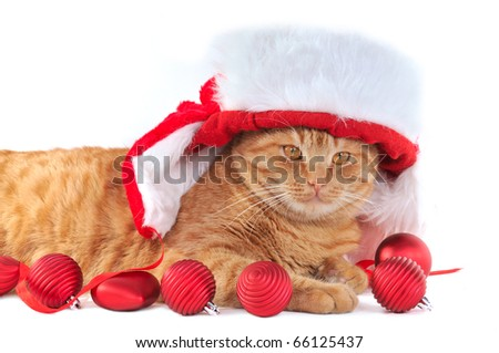Kitten in Christmas Hat with Christmas Balls