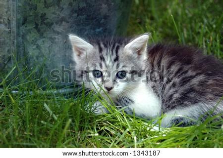 Kitten in grass with bucket - stock photo