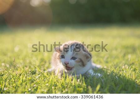 Kitten in green lawn - stock photo