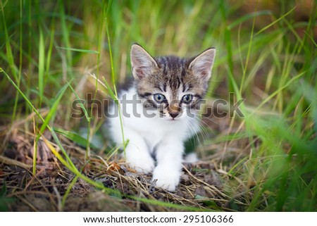 kitten in nature