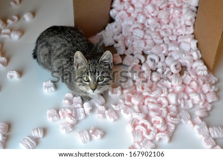 Kitten in spilled box of packing peanuts - stock photo